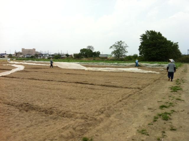 やまと芋の植え付け作業